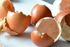 8 Manfaat Cangkang Telur, Jangan Buru-buru
