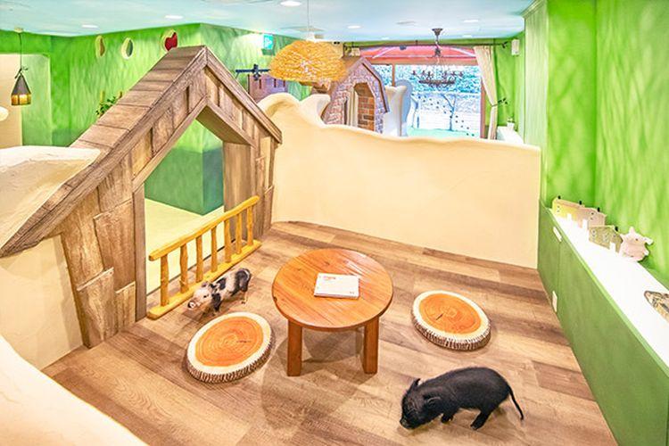 Kafe micro pig pertama di Jepang bernama Mipig Cafe. Lokasinya berada di Shibuya, Tokyo.