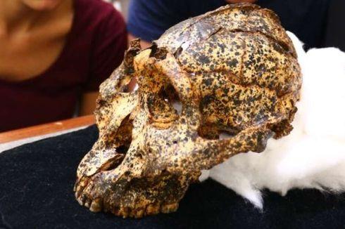Masih Sepupu Manusia, Ditemukan Kerangka Manusia Purba Berusia 2 Juta Tahun