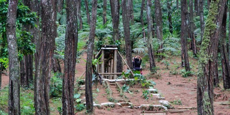 Purwakarta di Jawa Barat juga punya hutan pinus. Namanya Pasir Langlang, yang terletak di selatan Purwakarta.