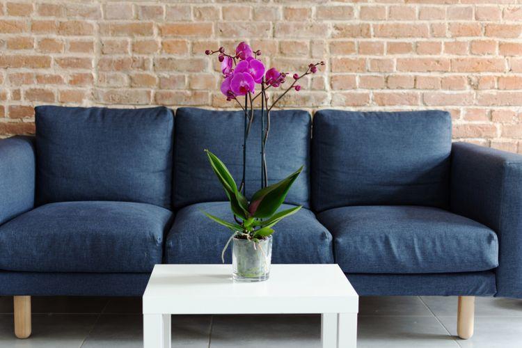 Ilustrasi tanaman anggrek di dalam rumah.