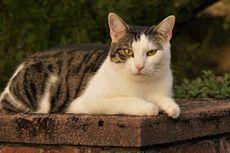 6 Masalah Kulit pada Kucing yang Tidak Boleh Diabaikan