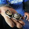 Kecil dan Sering Diabaikan, Ternyata Tutup Radiator Bisa Sebabkan Mesin Mobil Overheat