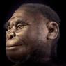 Kenapa Homo Floresiensis Disebut juga Manusia Kerdil?