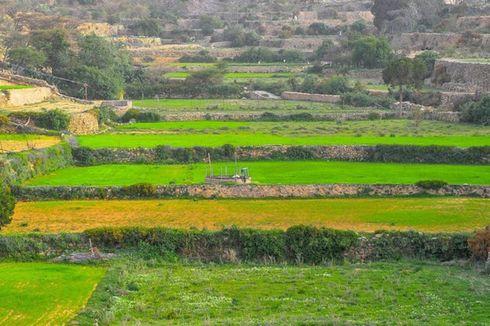Ternyata Ada Lahan Pertanian yang Menghijau di Arab Saudi