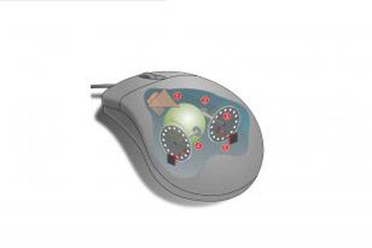Struktur dasar mouse.