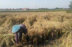 Potret Susutnya Lahan Pertanian dan Profesi Petani yang Terancam Punah
