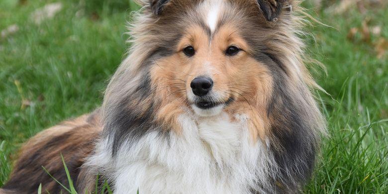 Alasan Mengapa Hidung Anjing Selalu Basah