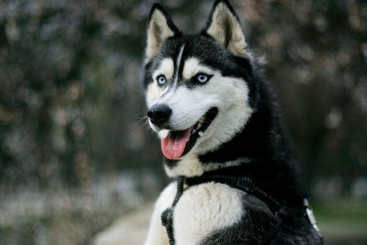 Ilustrasi anjing. Anjing memiliki kemampuan untuk merasakan jika manusia di hadapannya merasa takut.