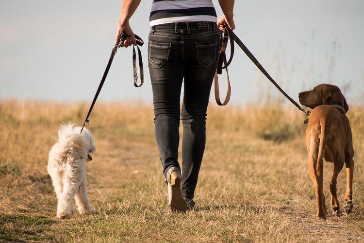 Ilustrasi mengajak anjing jalan-jalan.