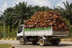 Lawan Diskriminasi Kelapa Sawit, Indonesia Gugat Uni Eropa di WTO