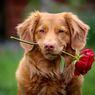 Pentingnya Menerapkan Batasan dengan Anjing Peliharaan