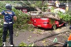 Sopir Angkot Tewas Tertimpa Pohon Mangga yang Tumbang Akibat Hujan dan Angin Kencang