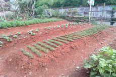 Tempat Sampah Disulap Petugas PPSU Jadi Kebun Sayur di Lebak Bulus