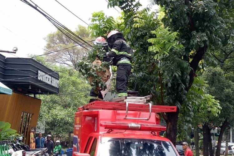Dinas Pemadam Kebakaran dan Penyelamatan Kota Tangerang Selatan mengevakuasi sarang tawon vespa yang berada di pohon kawasan Bintaro Sektor 3A, Pondok Aren,  Tangerang Selatan, Rabu (22/1/2020).