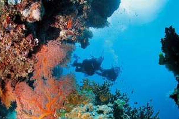 Great Barrier Reef adalah salah satu keajaiban alam dunia dan Situs Warisan Dunia. Laut dengan ekosistem terumbu karang terbesar di dunia ini juga tujuan wisata terbaik dunia menurut AS News & World Report 2016-2017.