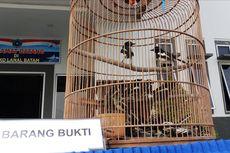 500 Burung Kacer Diselundupkan di Dalam Bakul, Sebagian Mati karena Stres