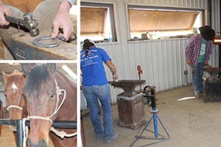 FArrier Science di Messalands Community Collage Website