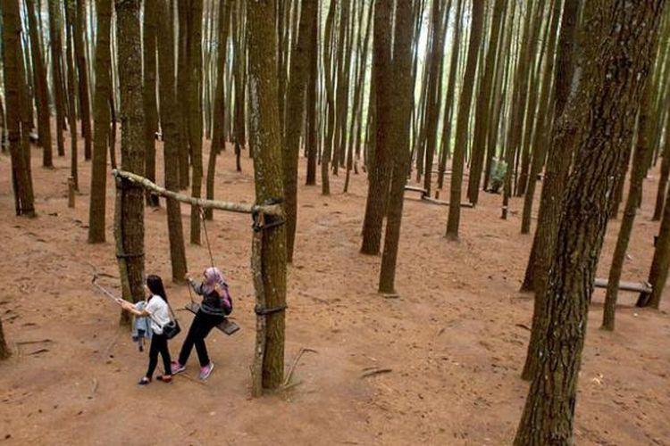 Pengunjung berwisata di Hutan Pinus Mangunan, Desa Mangunan, Dlingo, Bantul, DI Yogyakarta, Jumat (12/8/2016).