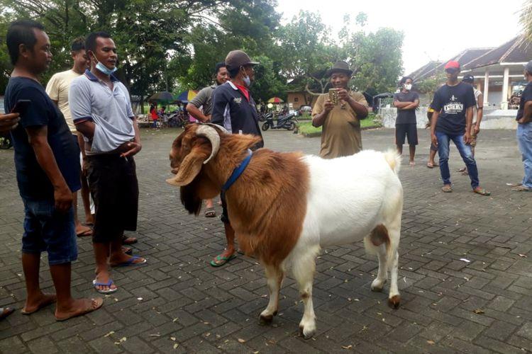 Peserta kontes bersiap meninggalkan Pasar Hewan Srengat setelah kontes kambing etawa dibubarkan polisi, Minggu (4/4/2021)