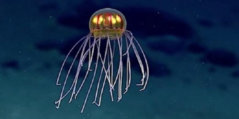 Ubur-ubur ditemukan di dekat Palung Mariana. Penampakannya mirip UFO.