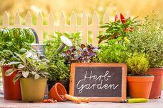 7 Tanaman Herbal yang Ternyata Bisa Bantu Membersihkan Rumah