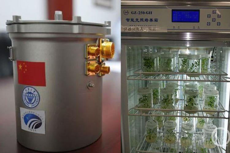 Kiri: ekosistem buatan, kanan: tanaman kentang yang menjadi bahan eksperimen
