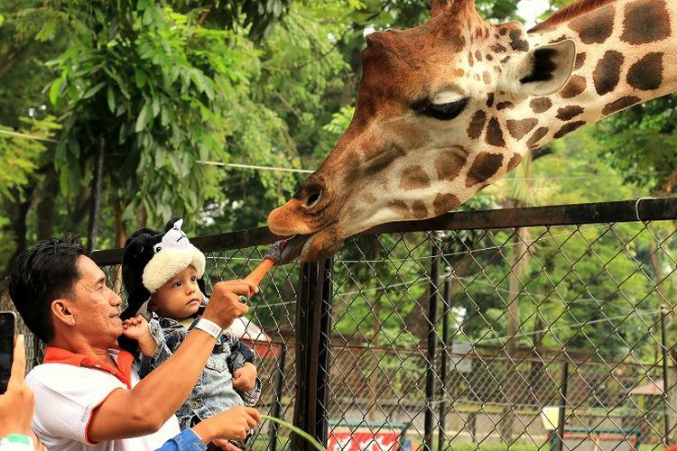 Kebun Binatang Surabaya.