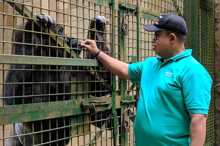 Dwi Suprihadi, Perawat Gorilla di Taman Margasatwa Ragunan