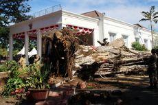 Pohon Besar Tumbang Nyaris Menimpa Rumah Dinas Gubernur Gorontalo