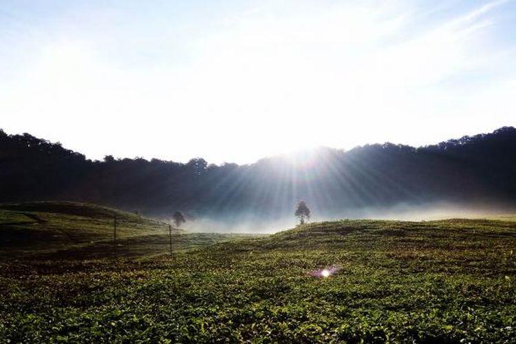 Kawasan jalur pendakian ke Gunung Kencana yang terletak di Kampung Rawa Gede, Desa Tugu Utara, Kecamatan Cisarua, Kabupaten Bogor, Jumat (5/5/2016). Di jalur pendakian ke Gunung Kencana banyak sekali ditemukan perkebunan teh nan hijau di sisi kiri dan kanan jalan.