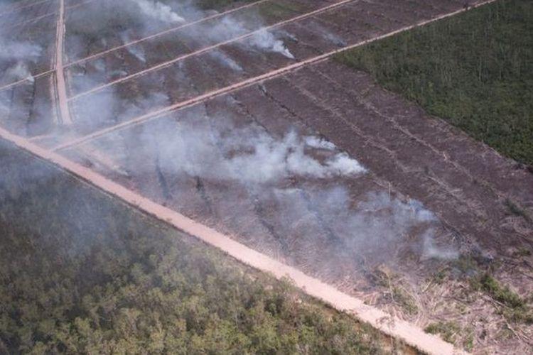 Foto ini diambil dari pesawat oleh Greenpeace pada Mei 2013 yang menunjukkan tumpukan kayu yang terbakar.
