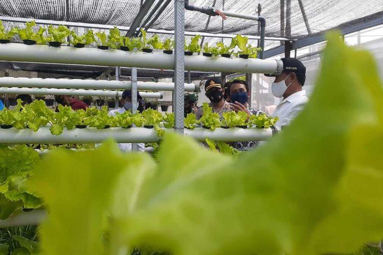 Henrye Aan, pemuda asal Kelurahan Rejomulyo, Kecamatan Kartoharjo (tengah) menunjukkan kebun tanaman hidropiniknya kepada Walikota Madiun, Maidi dan Kapolres Madiun Kota, AKBP R. Bobby Aria Prakasa