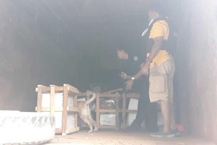 Petugas BNN saat menggeledah narkotika jenis ganja yang diselundupkan di Kawasan Pool Truk Ekspedisi, Kelurahan Bambu Apus, Cipayung, Jakarta Timur, Selasa (18/2/2020).