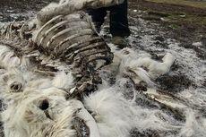 Dampak Perubahan Iklim Meluas, 200 Rusa Ditemukan Mati di Kutub