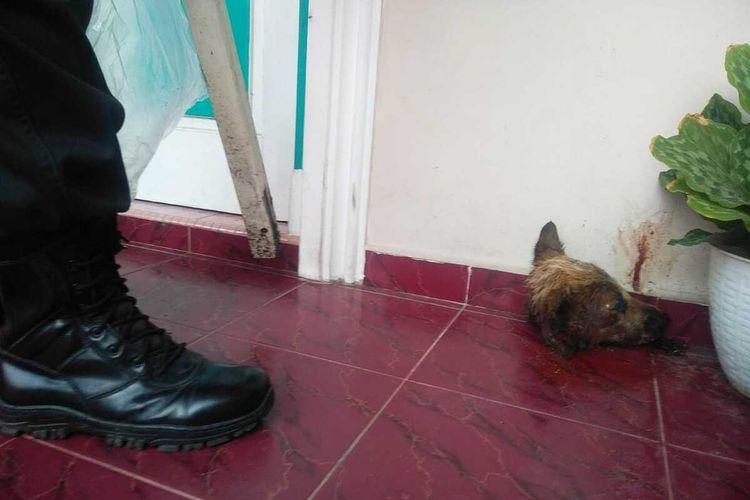 Potongan kepala anjing yang ditemukan di teras rumah Kasi Penkum Kejati Riau, Muspidauan, di Jalan Puyuh, Kelurahan Kampung Melayu, Kecamatan Sukajadi, Kota Pekanbaru, Riau, Jumat (5/3/2021). Peristiwa ini diduga teror yang dilakukan oknum yang tidak bertanggung jawab terhadap penegak hukum di Kejati Riau.