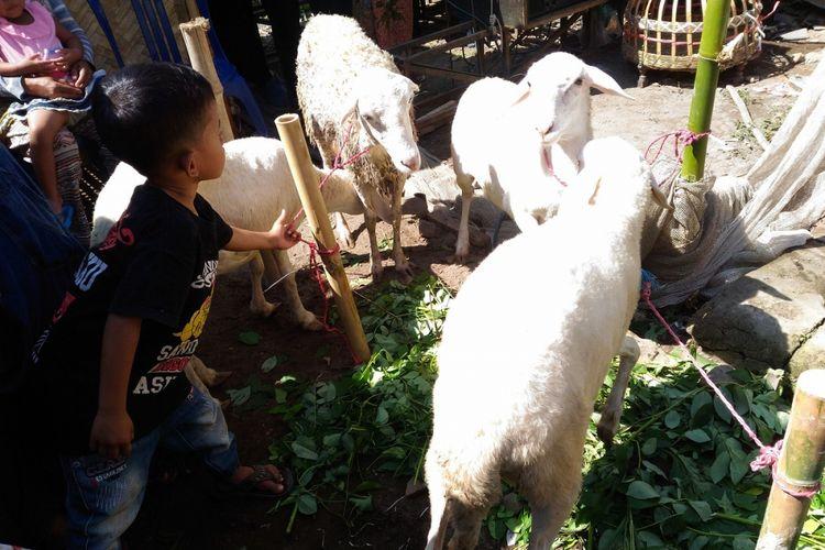 Menteri Pertanian, Andi Amran Sulaiman, menyerahkan bantuan pertanian kepada 33 kepala keluarga di Desa Desa Sukogidri, Kecamatan Ledok Ombo, Kabupaten Jember, Rabu (23/5/2018).