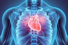 Kedelai Bagus, tetapi Manfaatnya bagi Jantung Dibantah