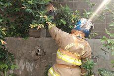 Minimnya Pakaian Khusus Evakuasi Tawon Petugas Pemadam Kebakaran...
