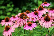 5 Obat Herbal Kanker Payudara yang Terbukti Secara Ilmiah