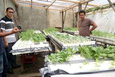 Mengembangkan Bisnis Pertanian Hidroponik di Bireun