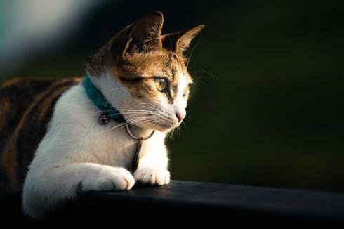 Berapa Lama Kucing Hidup? Inilah Fakta Umur Rata-rata Si Meong