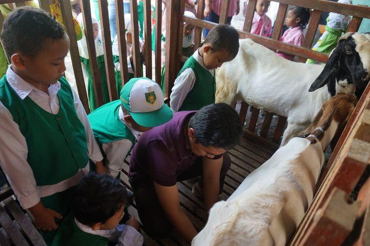 Anak-anak TK belajar memeras susu kambing di Lerek Kelurahan Gombeng Banyuwangi Senin (23/1/2017)