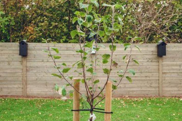 3 cara menanam pohon dengan benar di rumah