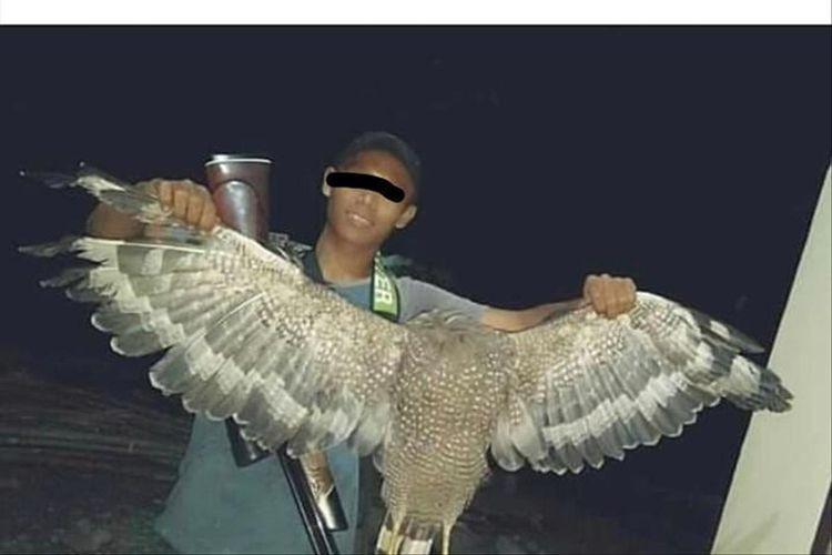 Unduh 88+ Foto Gambar Burung Elang Lengkap  Terbaru Free