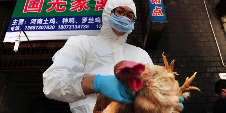 Dalam foto ini terlihat seorang petugas dari Pusat Pengendalian dan Pencegahan Penyakit Hewan di Changsa, Provinsi Hunan, China, tengah memeriksa seekor ayam dalam rangka mencegah penyebaran flu burung.