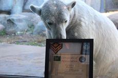 Beruang Ini Naik Pangkat Jadi Kopral Kepala saat Berusia 5 Tahun