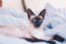 Kucing Juga Ketombean, Haruskah Pemilik Merasa Cemas?