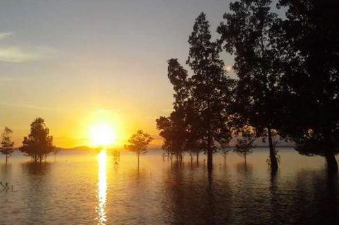 Harga Rumput Laut Anjlok, Warga Nunukan Babat Mangrove untuk Tambak