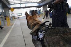 Bagaimana Nasib Anjing K-9 saat Negara Bagian AS Melegalisasi Ganja?